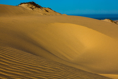 Dunes of the Pacific