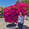 Mary and the Bougainvillea. Yes, we've been shopping.