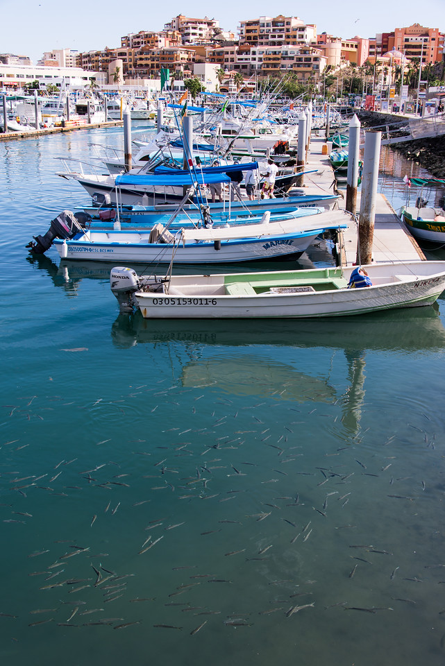 View from docks at Cabo San Lucas - January 2015