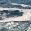 Odd sea foam