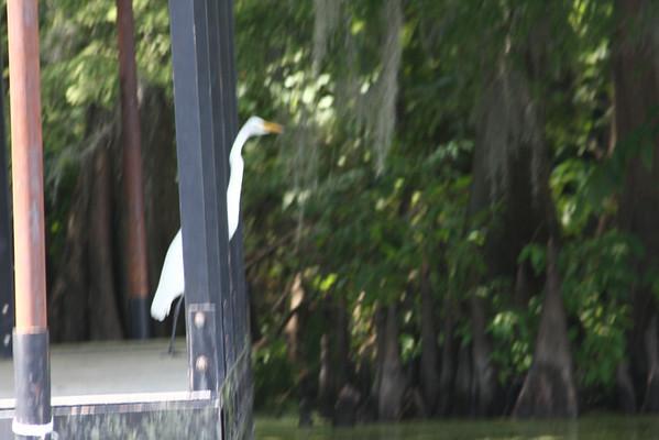 Caddo Lake Swamp and Jefferson Texas