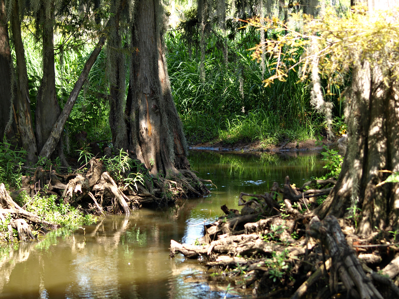 Caddo Lake Slough
