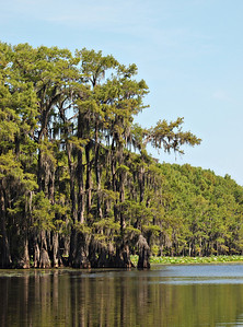 Caddo Lake Cypress Trees
