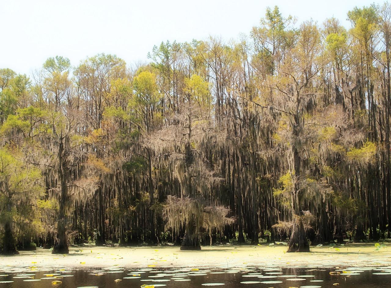 Mystical Caddo Lake