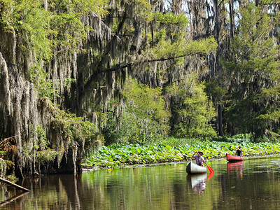 Two Canoes on Caddo Lake