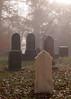 Cades Cove; Primitive Baptist Church cemetery; 5x7