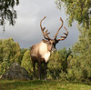 "Deer, <a href=""http://www.highlandwildlifepark.org"" target=""_blank"">Highland Wildlife Park</a>"