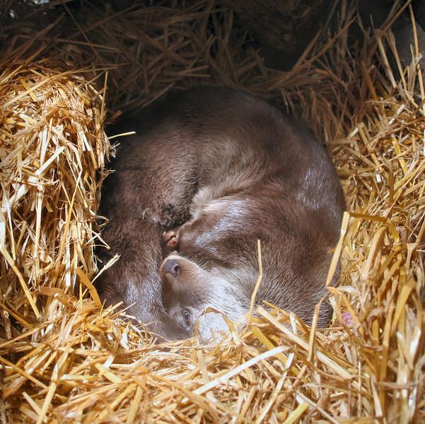 "Otter, <a href=""http://www.highlandwildlifepark.org"" target=""_blank"">Highland Wildlife Park</a>"