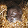 "Otter, <a href=""http://www.highlandwildlifepark.org"" target=""_blank"">Highland Wildlife Park</a>"