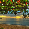 Fall foliage in the tropics; mid''winter'' : Palm Cove ,Queensland