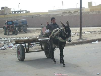 Donkey cart in Dhaba, Egypt.