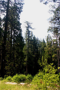 7/8/07 View of North Grove Meadows from Picnic Area, Calaveras Big Trees State Park, Calaveras County, CA