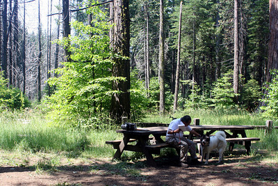 7/8/07 North Grove Picnic Area, Calaveras Big Trees State Park, Calaveras County, CA