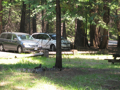 7/8/07 Beaver Creek Picnic Area, South Grove, Calaveras Big Trees State Park, Calaveras County, CA