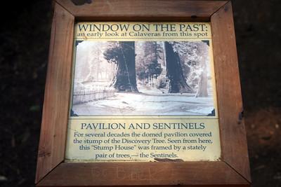 7/8/07 Calaveras Big Trees State Park, Calaveras County, CA
