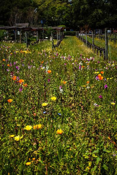 Flowering Vinyards