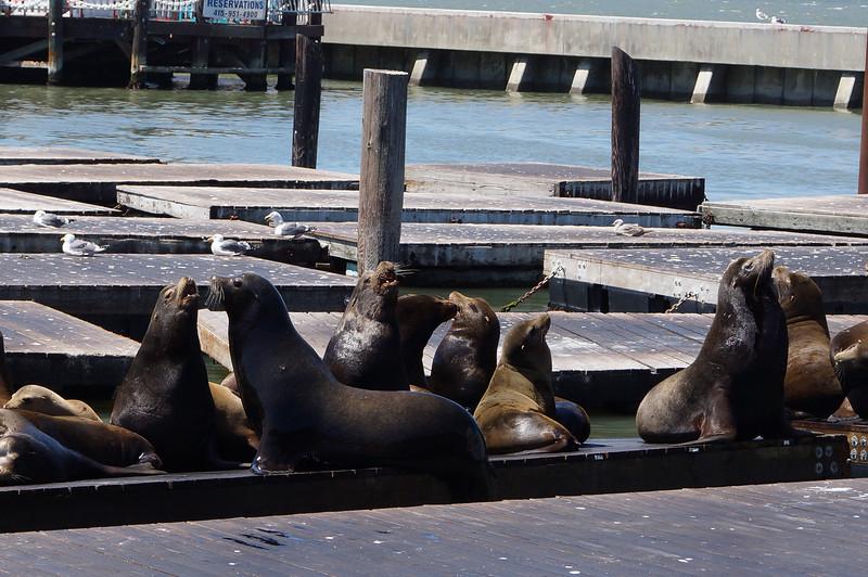 The seals of San Francisco