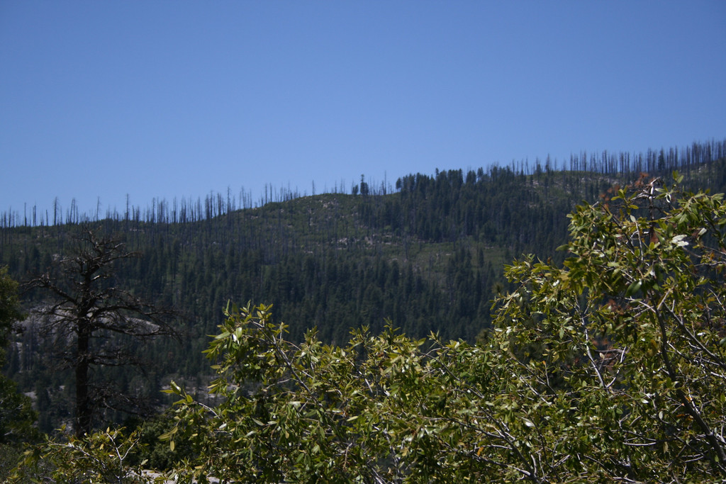 Dead trees...