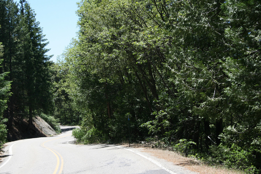 Beautiful trees along the road.