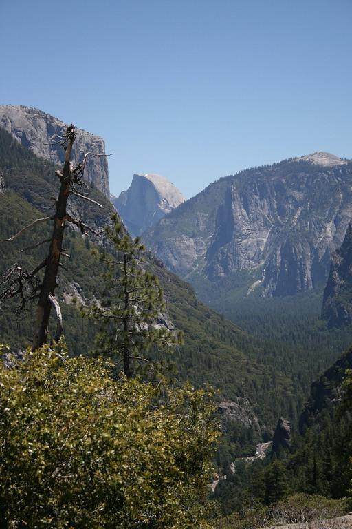A tree and Half Dome at Yosemite National Park