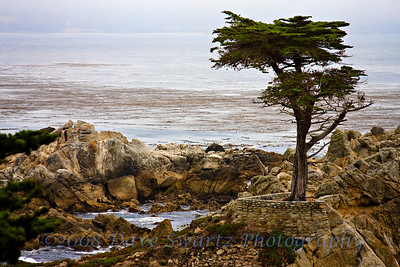 Lone Cypress Tree, Carmel, California