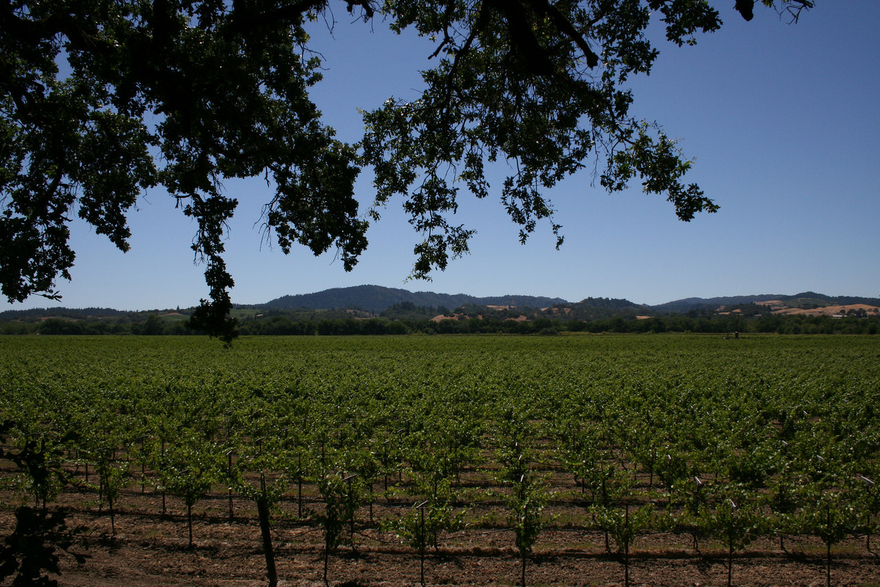 The view from Eastside Road, south of Healdsburg, in the Russian River valley.