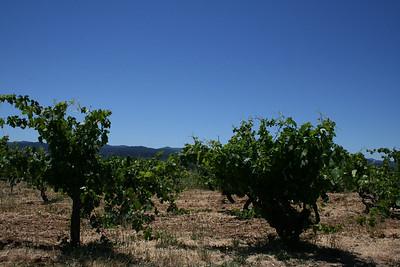 Vineyards...
