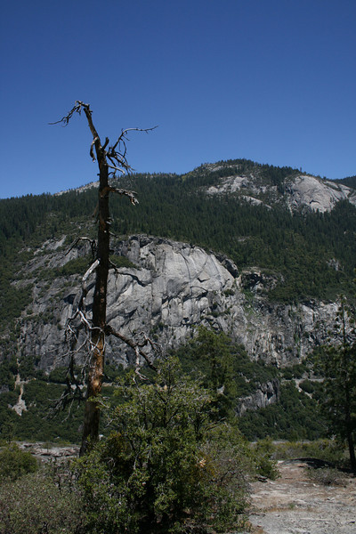 A lone tree in Yosemite