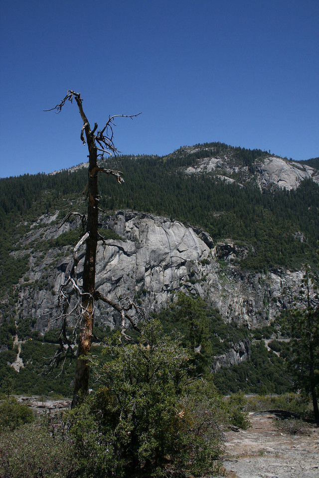 A lone tree in Yosemite