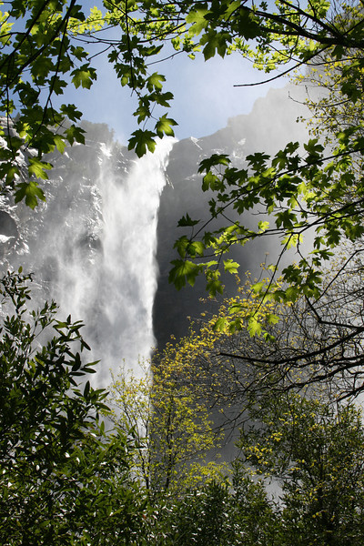 Windy Bridalveil Fall through the leaves.  My fav.