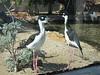 Birds at Long Beach Aquarium