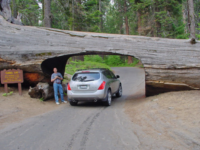 A car under sequoia