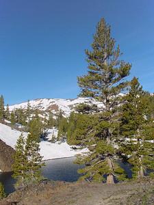 Fir at mountain lake