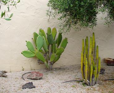 Mission Santa Ines. Cactuses.