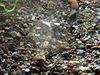 Monterey Bay Aquarium (camouflage)