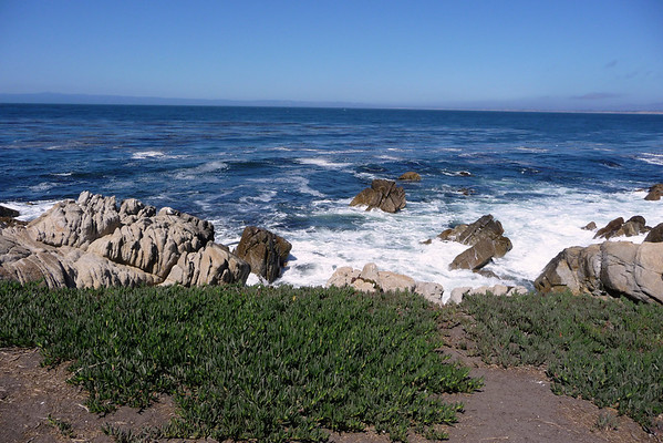 Thursday, 8/21: Searching for Sea Lions in Pacific Grove
