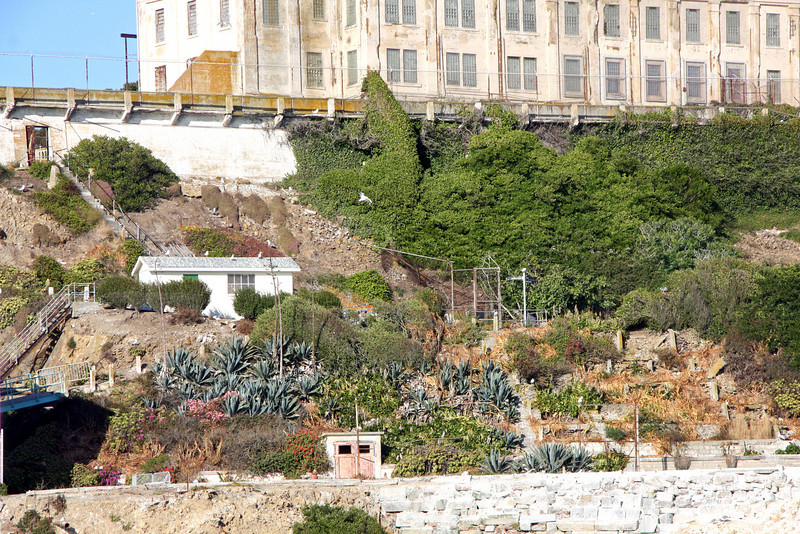 <b>Gardens<b> - <b>Recreation Yard and Cellhouse in the Background</b><br> <br> Prisoners planted the slope on either side of the stairs below the recreation yard. Eliott Michener, who arrived in 1941, a convicted counterfeiter, worked for years to improve the soil conditions surrounding Alcatraz. He planted <i>Drosanthemum</i> (ice plant), which helped with erosion control. Now the slope has a variety of plants that have survived over the years—<i>Aloes, Drosanthemum, Acanthus, Watsonia,</i> and <i>Pelargoniums</i>.