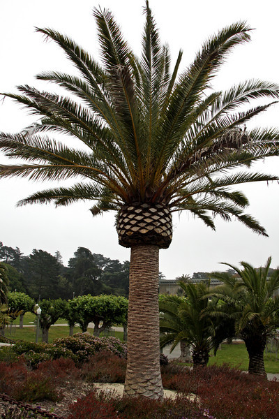 <b>Golden Gate Park</b> is an 1870 historic park in the heart of a busy city, even larger than New York's Central Park.
