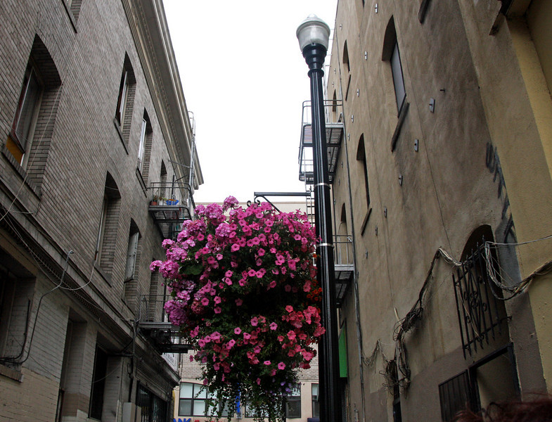 <b>Beautiful flowers hanging in one of the alleyways heading into Chinatown</b>  [B]