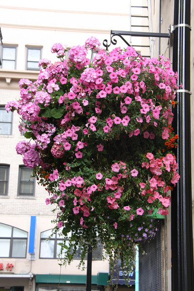 <b>Beautiful flowers hanging in one of the alleyways heading into Chinatown</b>