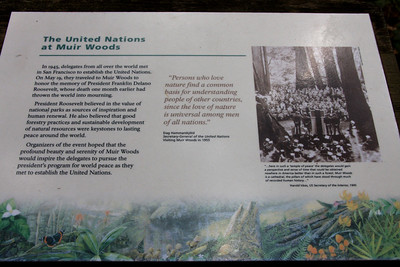 The United Nations at Muir Woods
