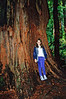 Redwood, Muir Woods National Monument