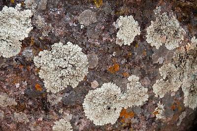 Lichen (and moss?) on a rock at Pinnacles National Park .