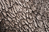 Tree bark at Pinnacles National Park.