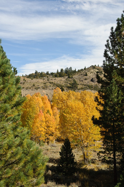 In Sierra Nevada Mountains