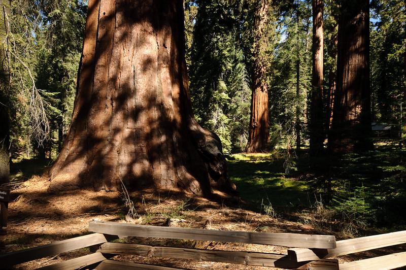 Mariposa Grove Giant Sequoias, Yosemite National Park, California