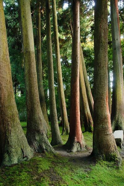 Golden Gate Park, Japanese Gardens, San Francisco