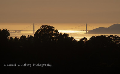 View of the Golden Gate Brdige from Tilden Regional Park.