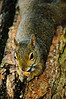 Squirrel, Japanese Garden, San Francisco