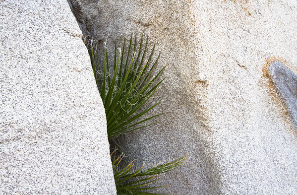 green growing from cracks in rock